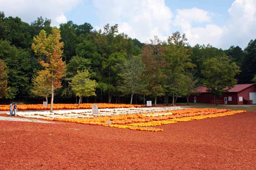 Georgia Trip pumpkin patch 1 sm