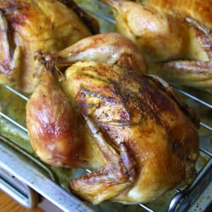 roasted cornish game hens recipe garlic rosemary thyme herbs lemon moist tender browned crispy skin
