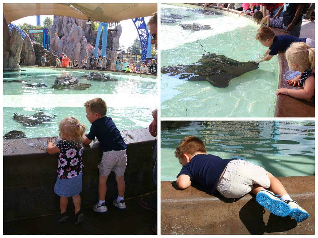 SeaWorld Collage 1