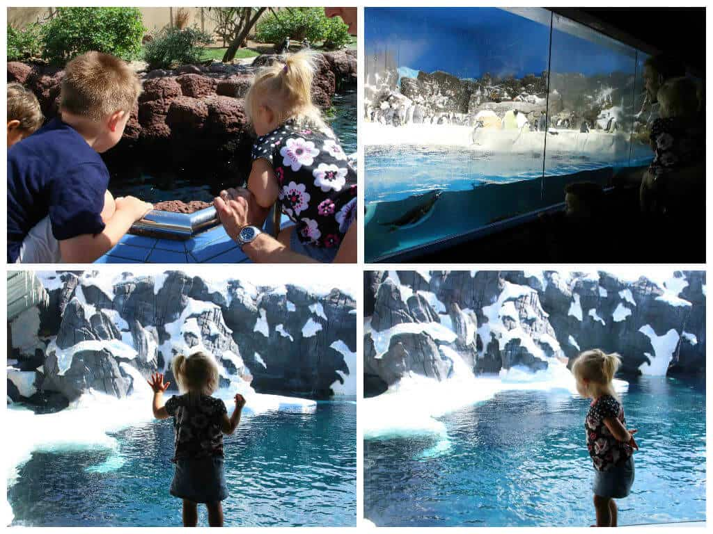 SeaWorld Collage 3