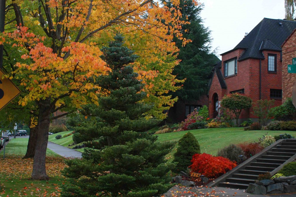 Tacoma Autumn 11