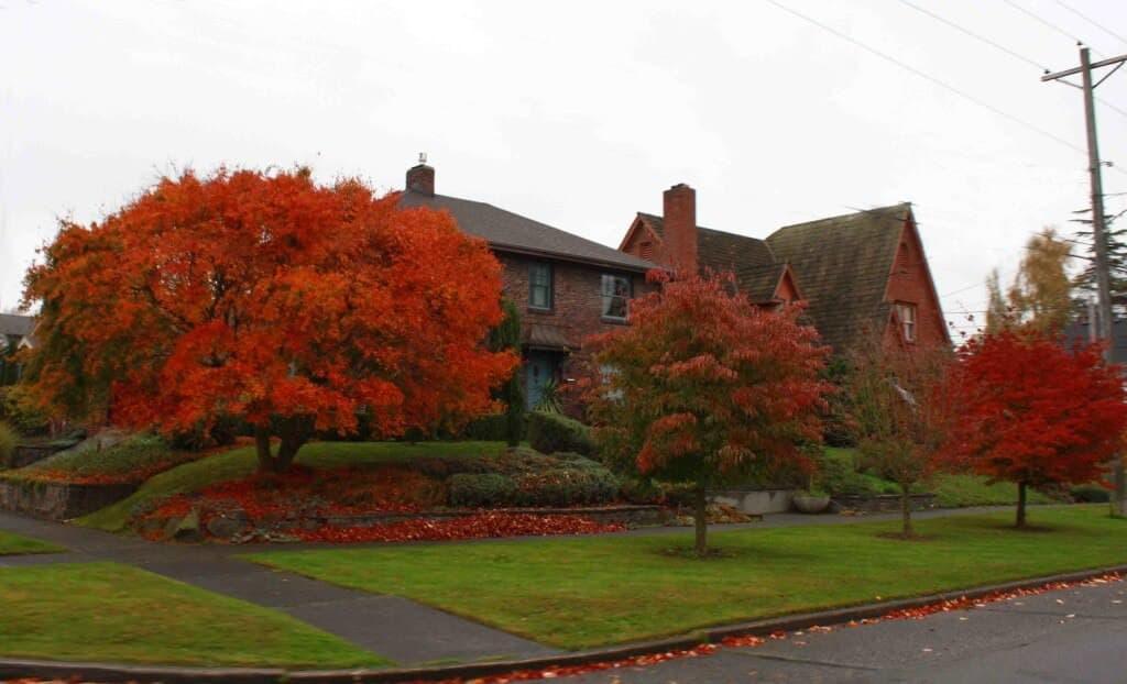 Tacoma Autumn 36