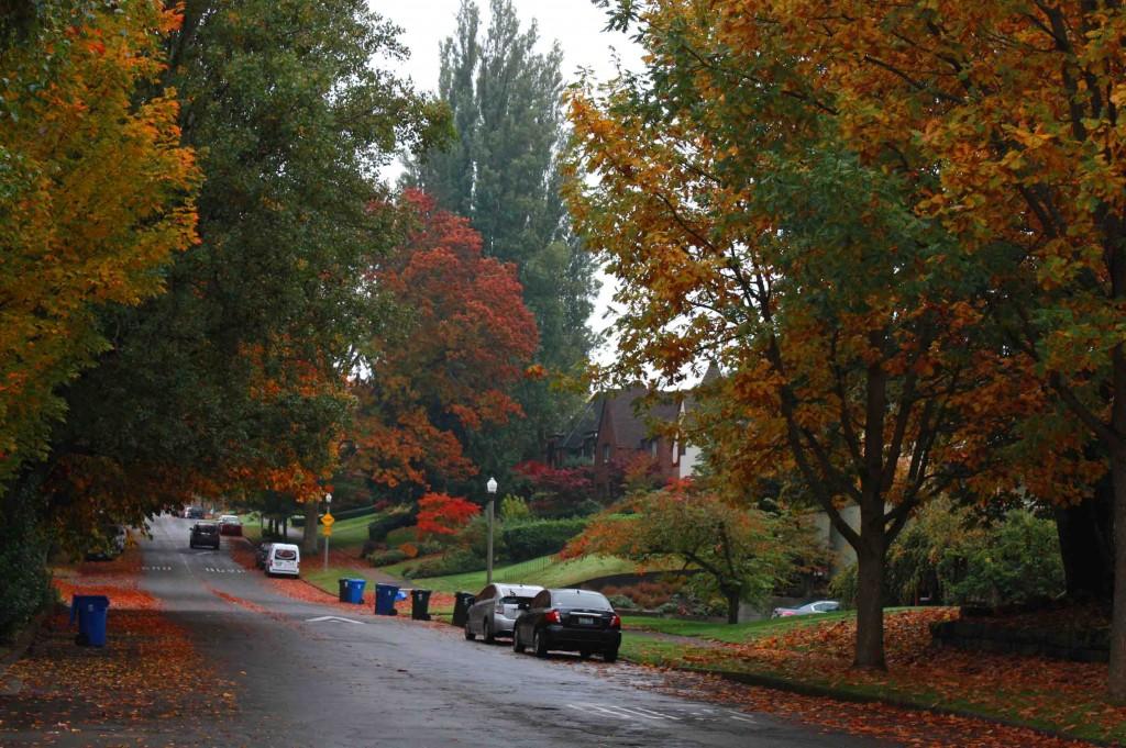 Tacoma Autumn 5