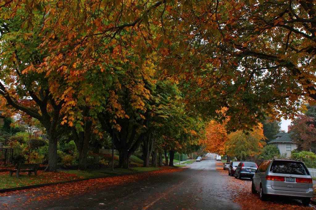 Tacoma Autumn 6