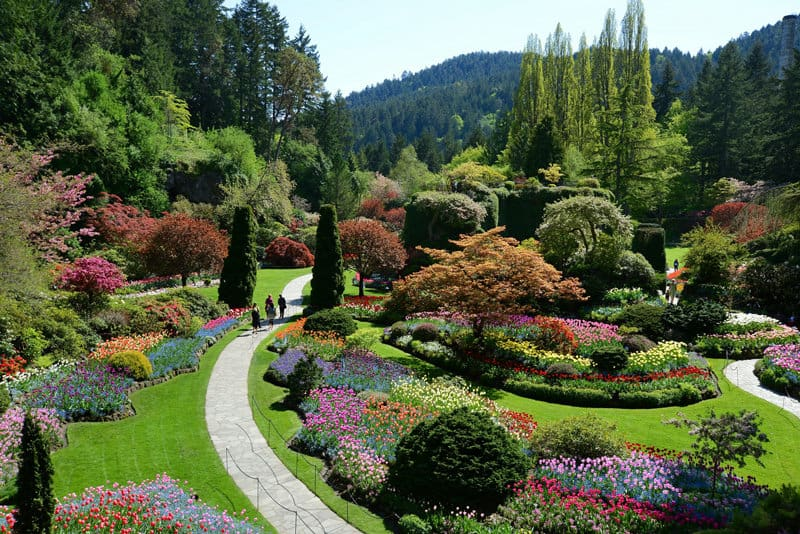Breathtaking Butchart Gardens and High Tea in Victoria, BC - The ...