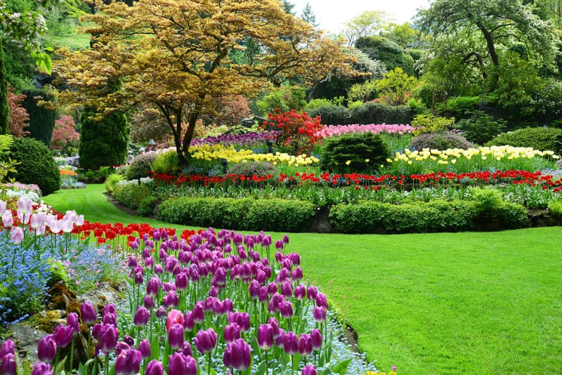 Breathtaking butchart gardens and high tea in victoria bc the butchart media spring 11 thecheapjerseys Images