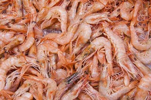 shrimp-83295_640