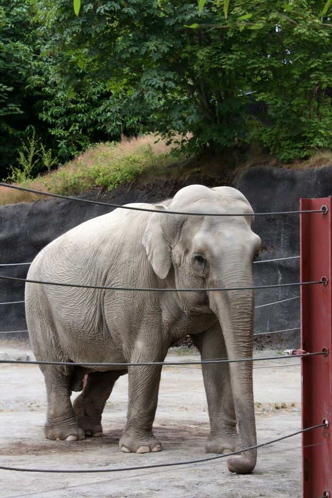 Pt Defiance Zoo 6