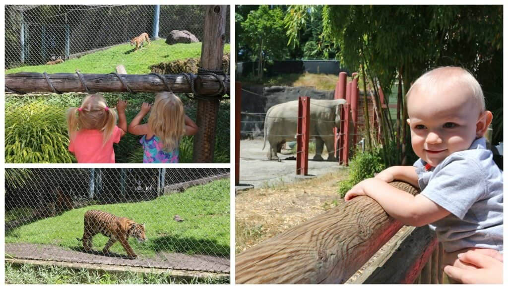 Zoo Collage 7