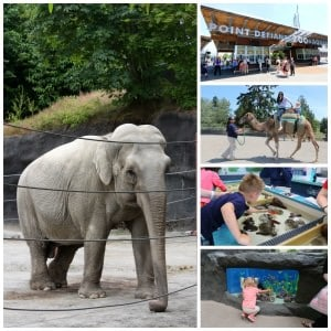 A Visit To Tacoma's Point Defiance Zoo & Aquarium