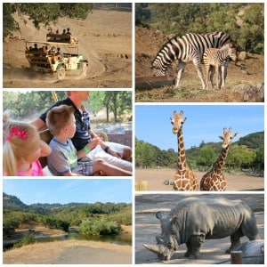 Safari West:  An African Adventure