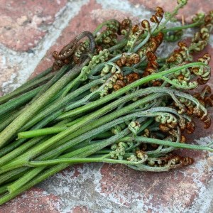 Wild Foraging: How To Identify, Harvest and Prepare Bracken Fern (Fiddleheads)