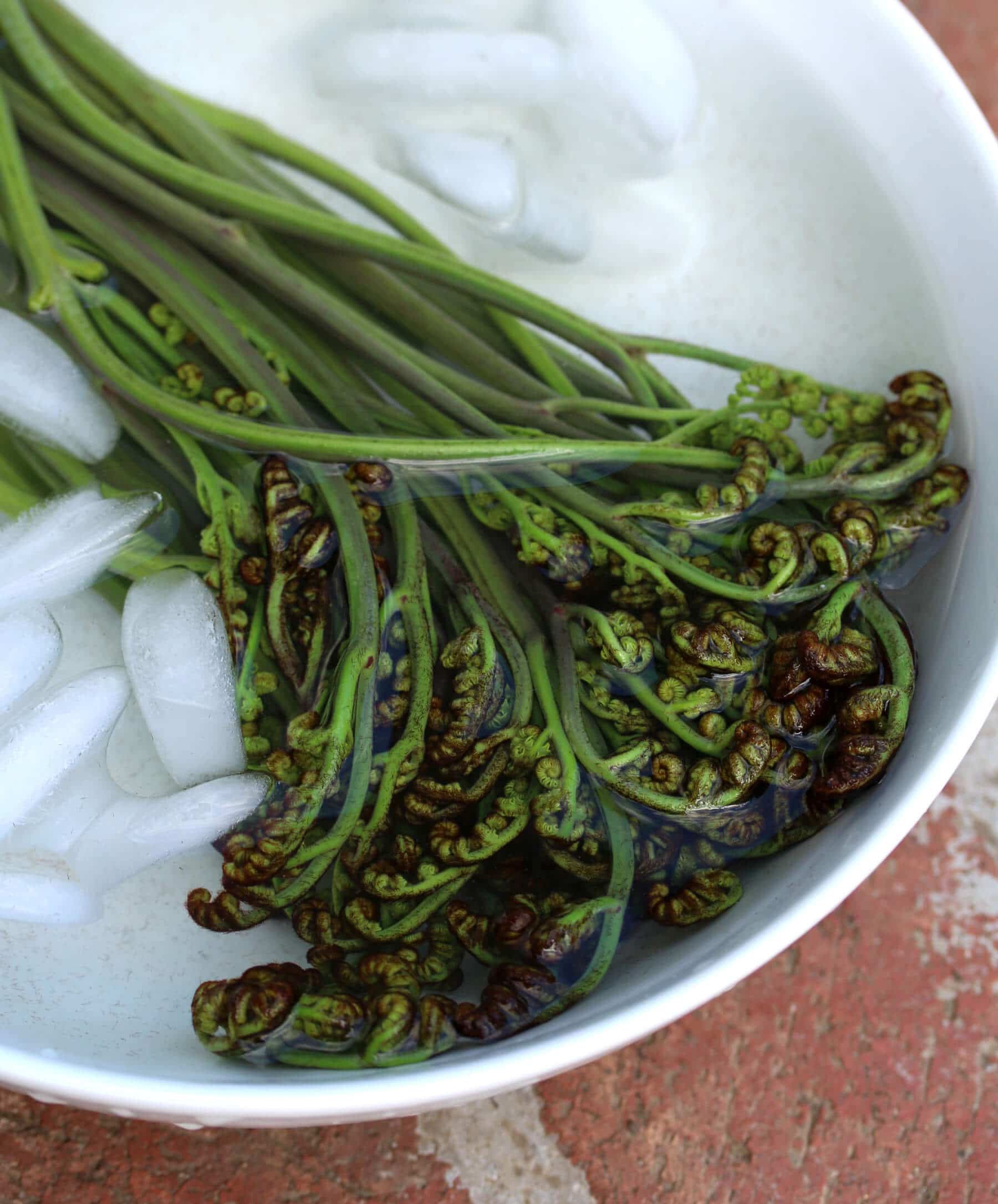 how to prepare fiddleheads for freezing