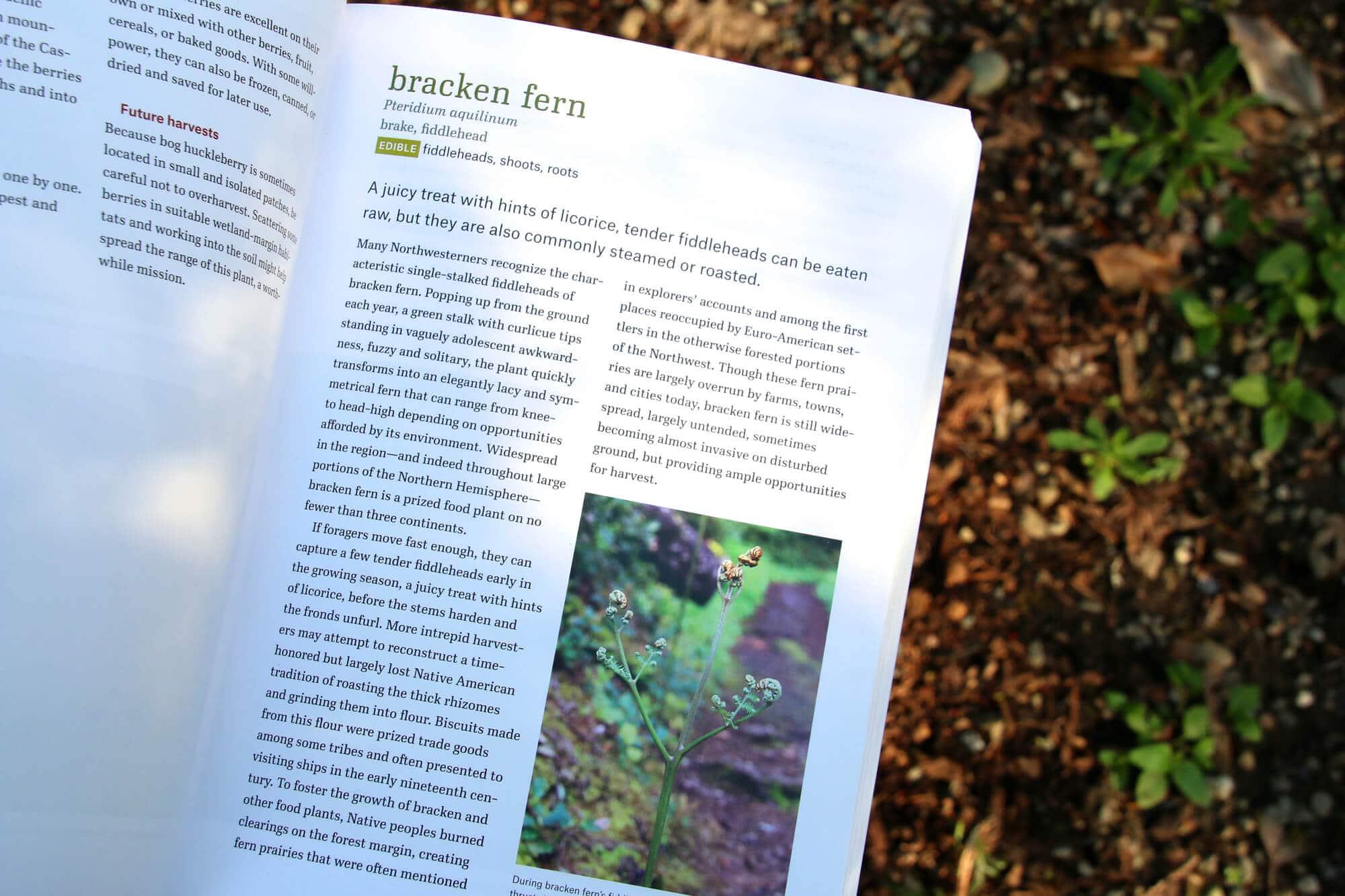 Bracken-Fern-3