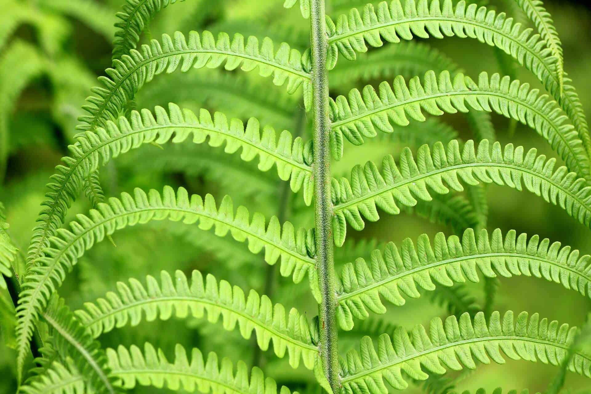green-187949_1920