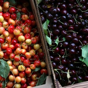 How To Can Cherries, Dehydrate Them & Use The Pits