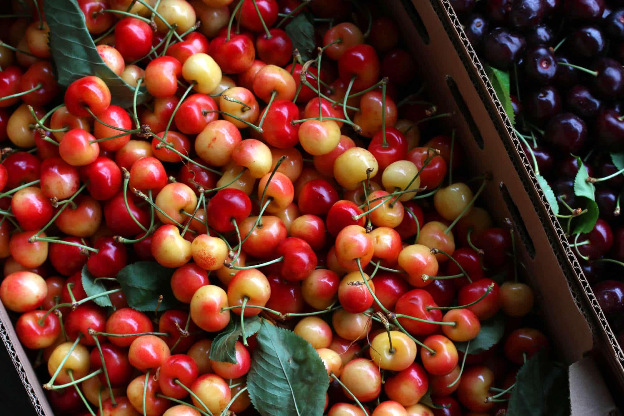 Cherries-28