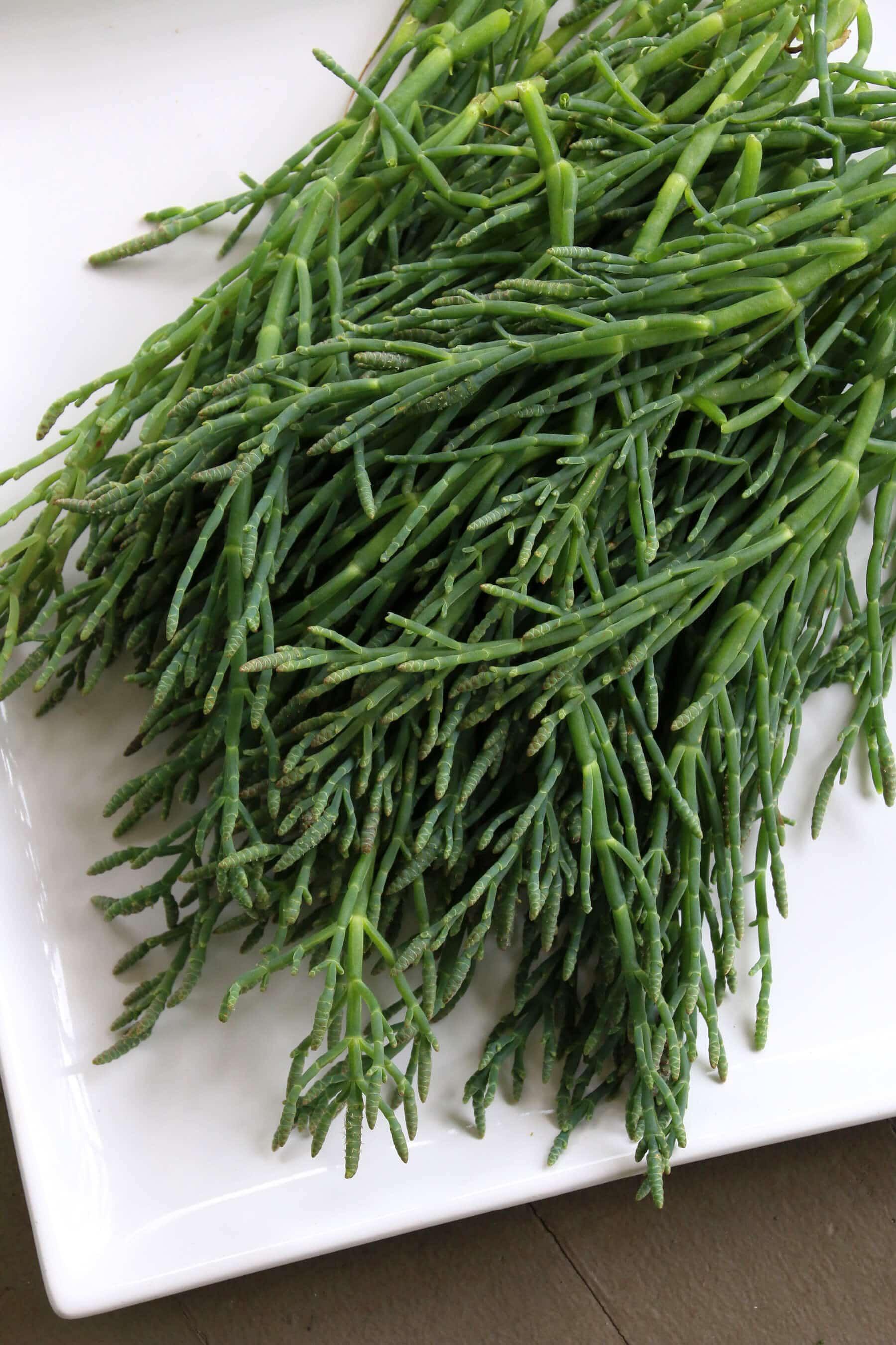 Sea-Asparagus-4