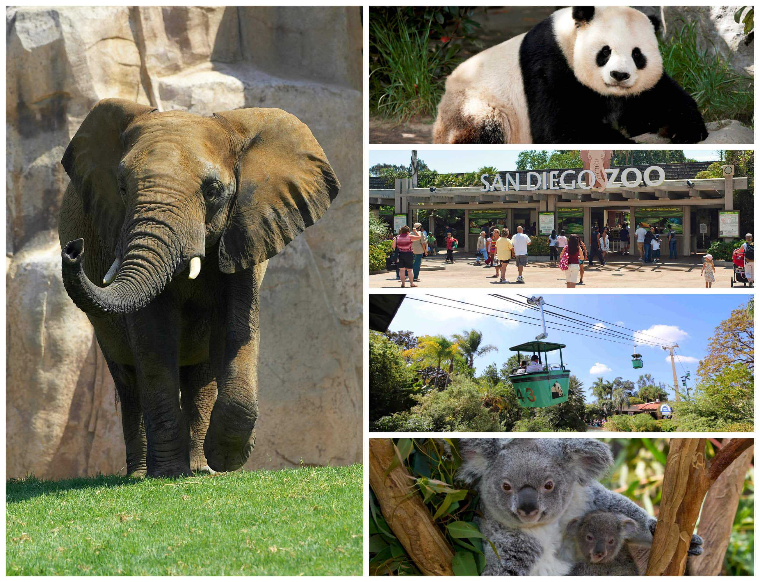 san-diego-zoo-collage-2