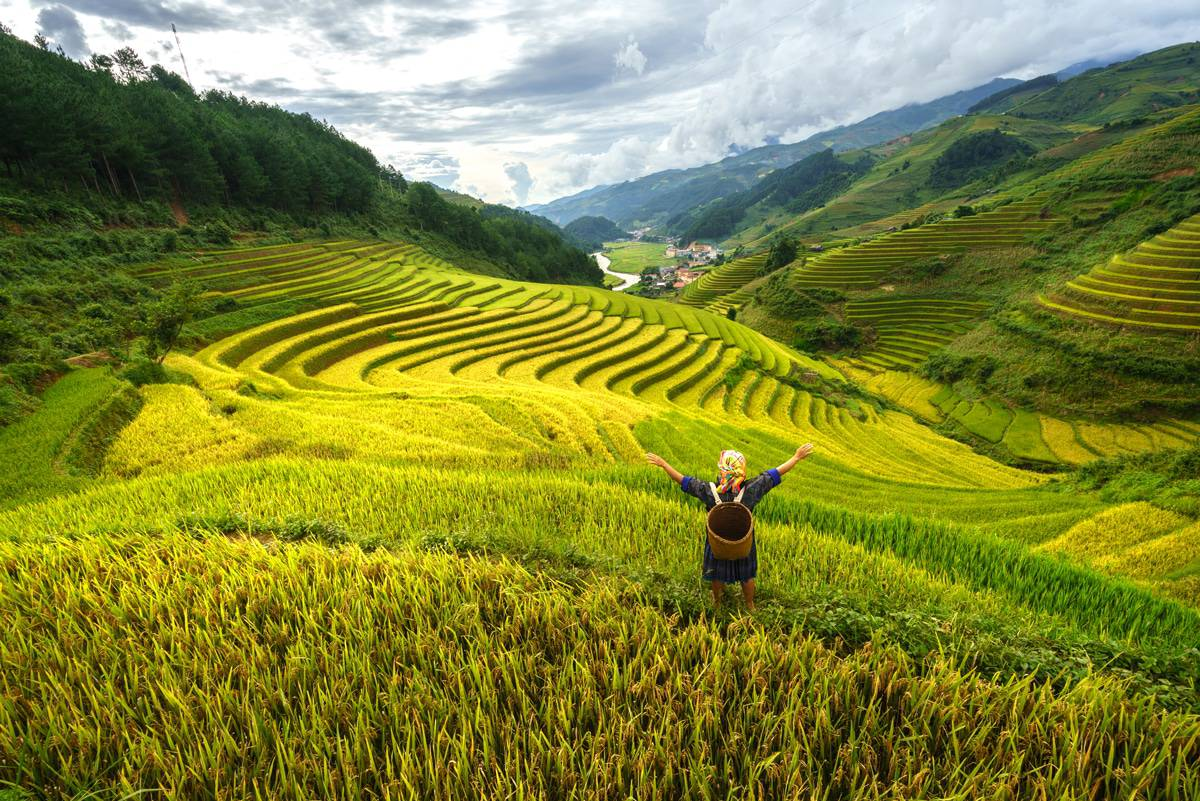 woman in terraced rice field