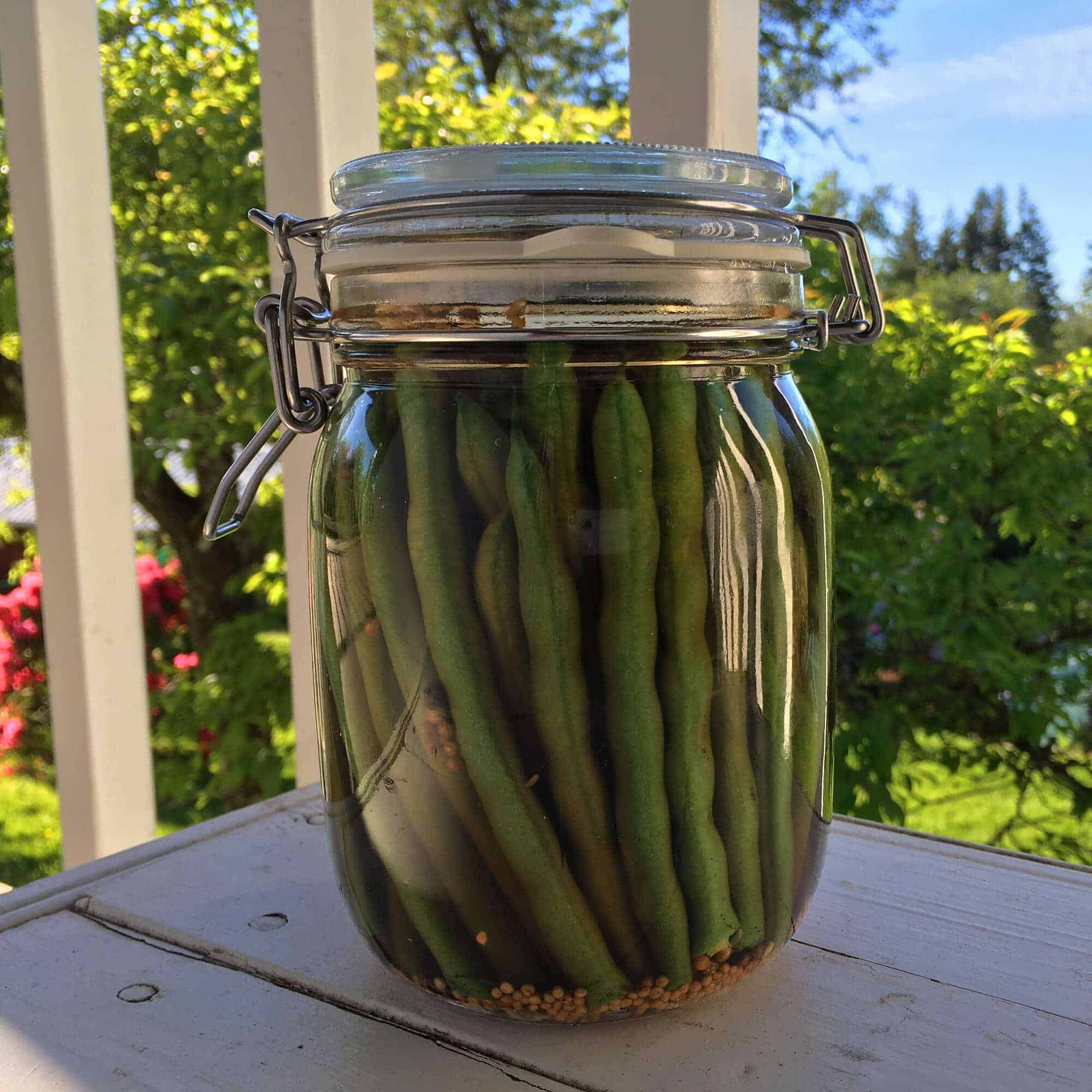 dill pickled green beans dilly beans recipe pickling canning preserving