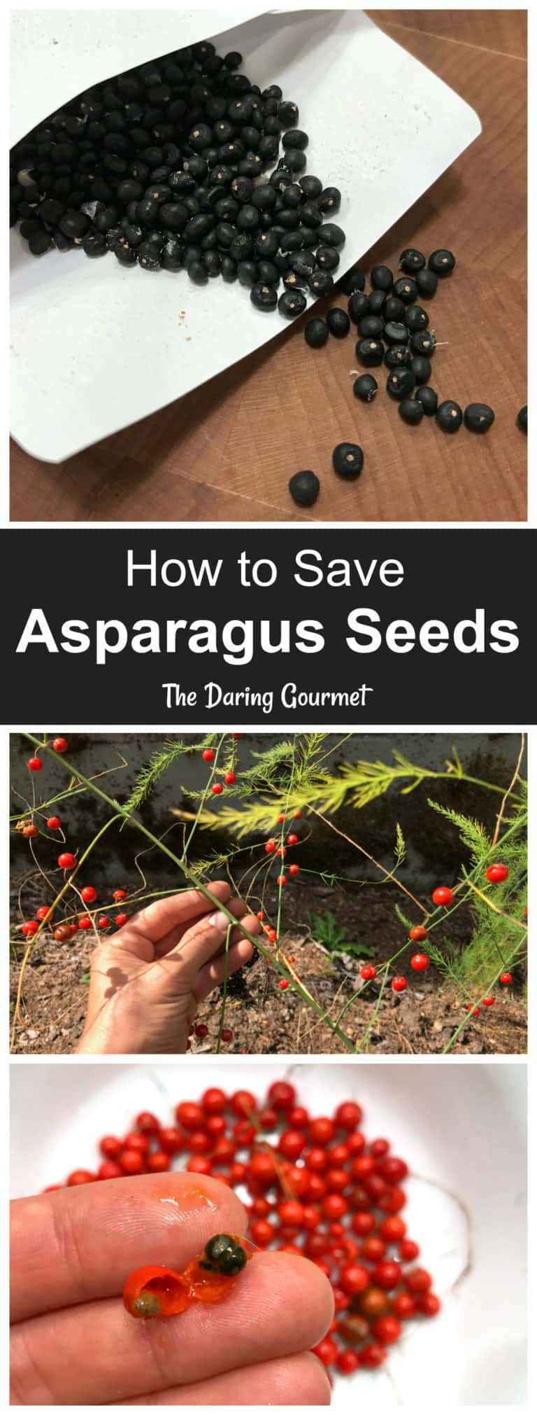 how to save asparagus seeds