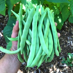 how to freeze green beans blanch