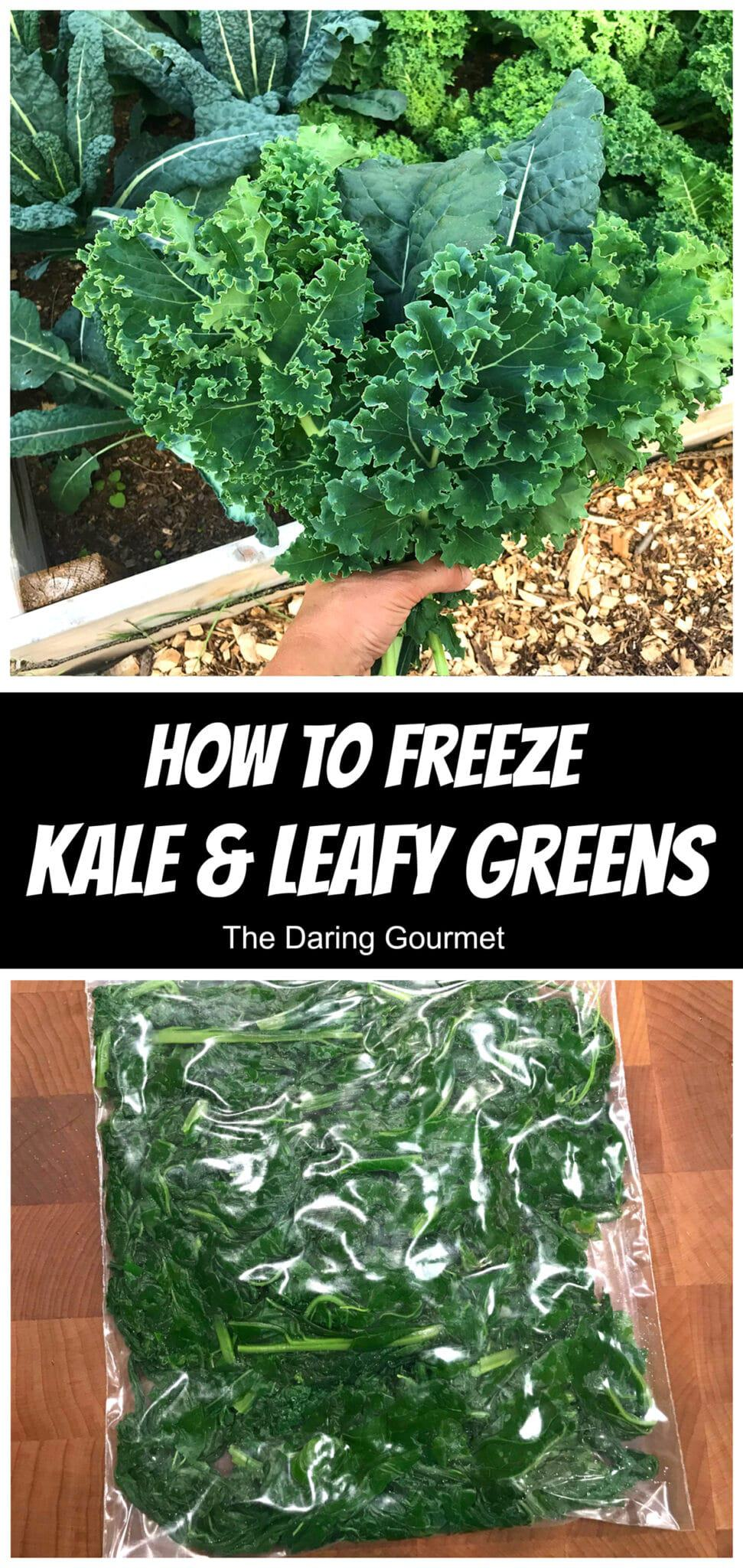 how to freeze kale leafy greens collard greens mustard spinach swiss chard