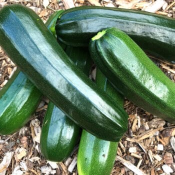 how to freeze zucchini summer squash courgettes