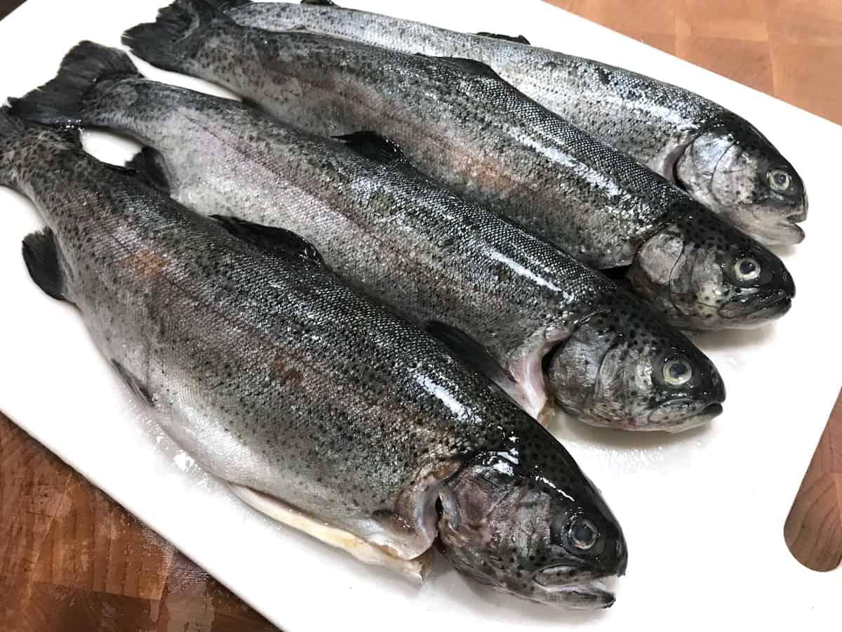 fresh whole trout